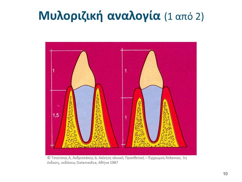 Μυλοριζική αναλογία (2 από 2)