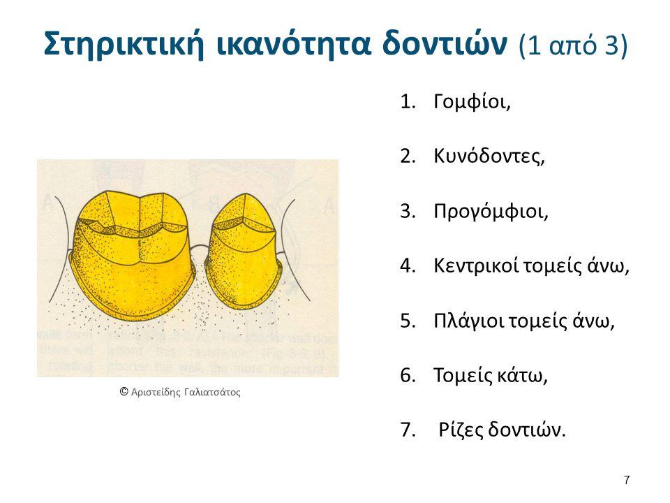 Στηρικτική ικανότητα δοντιών (2 από 3)