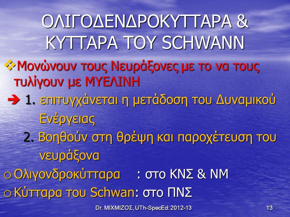 ΟΛΙΓΟΔΕΝΔΡΟΚΥΤΤΑΡΑ & ΚΥΤΤΑΡΑ ΤΟΥ SCHWANN