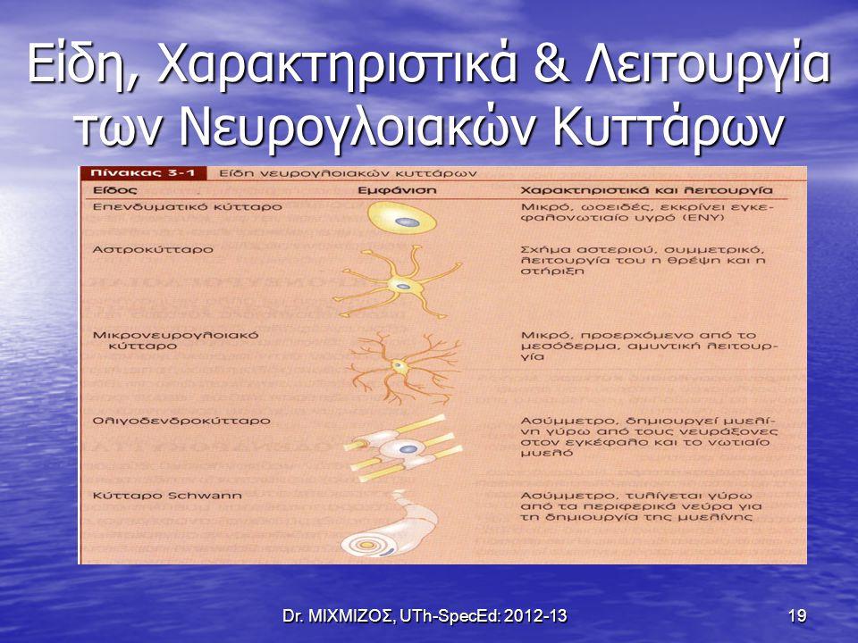 Είδη, Χαρακτηριστικά & Λειτουργία των Νευρογλοιακών Κυττάρων
