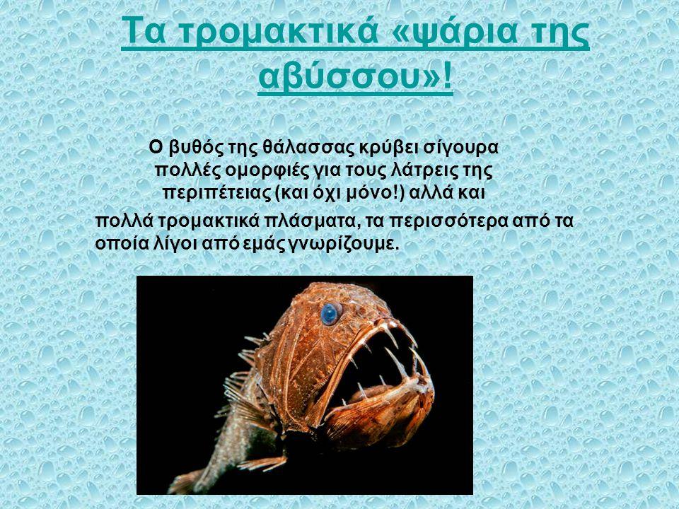 Τα τρομακτικά «ψάρια της αβύσσου»!