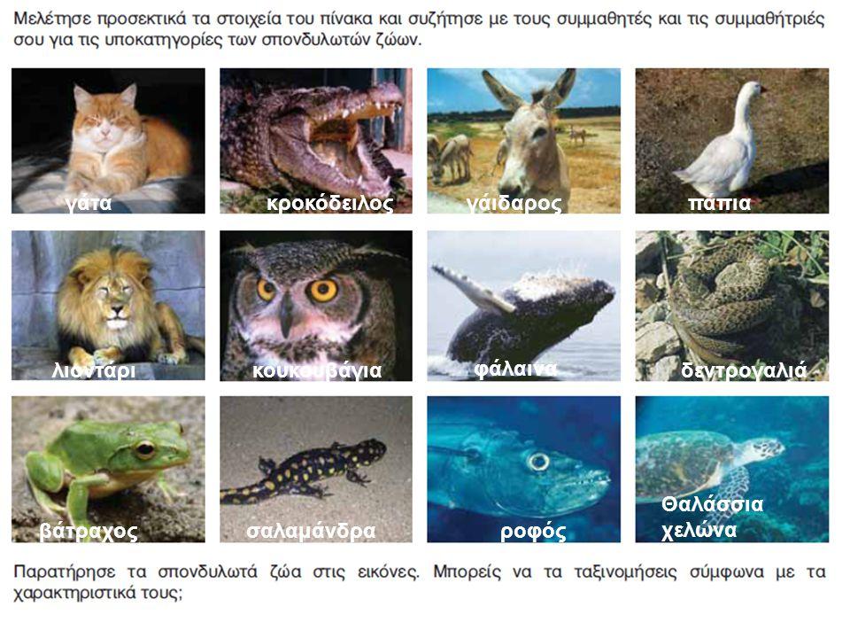 γάτα κροκόδειλος. γάιδαρος. πάπια. λιοντάρι. κουκουβάγια. φάλαινα. δεντρογαλιά. Θαλάσσια χελώνα.