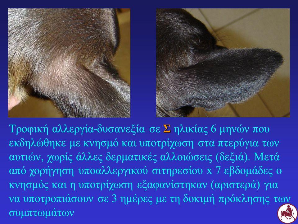 Τροφική αλλεργία-δυσανεξία σε Σ ηλικίας 6 μηνών που εκδηλώθηκε με κνησμό και υποτρίχωση στα πτερύγια των αυτιών, χωρίς άλλες δερματικές αλλοιώσεις (δεξιά).