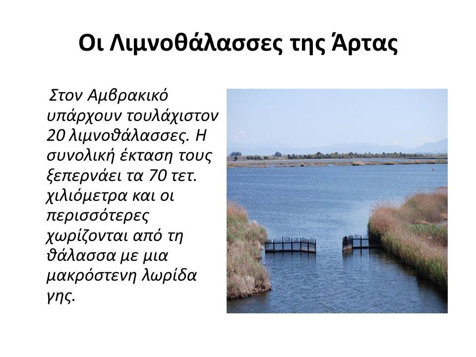 Οι Λιμνοθάλασσες της Άρτας