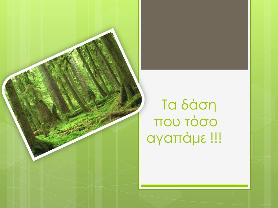 Τα δάση που τόσο αγαπάμε !!!