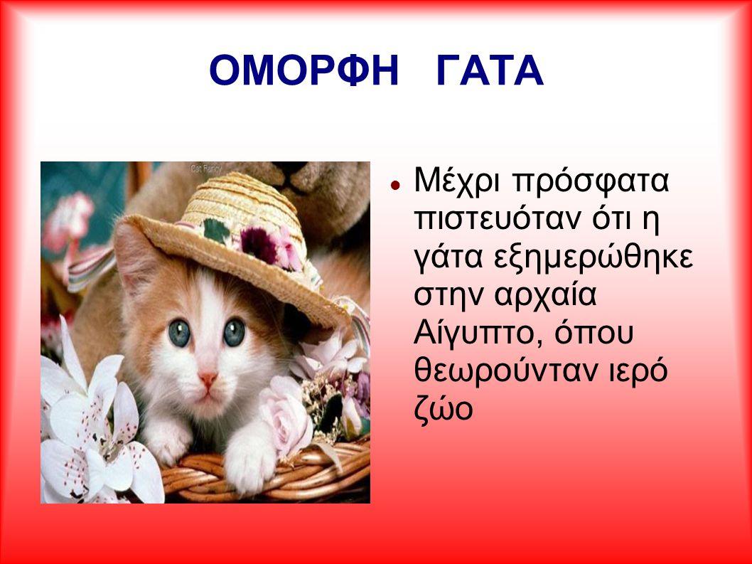 ΟΜΟΡΦΗ ΓΑΤΑ Μέχρι πρόσφατα πιστευόταν ότι η γάτα εξημερώθηκε στην αρχαία Αίγυπτο, όπου θεωρούνταν ιερό ζώο.