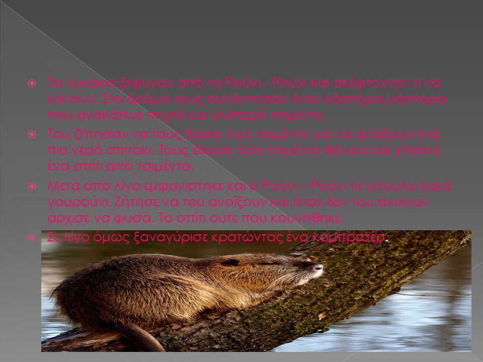 Τα λυκάκια ξέφυγαν από το Ρούνι - Ρούνι και σκέφτονταν τι να κάνουν