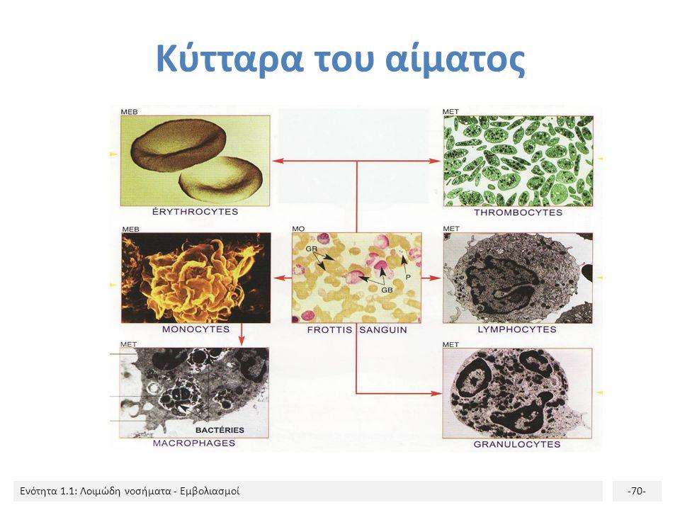 Κύτταρα του αίματος
