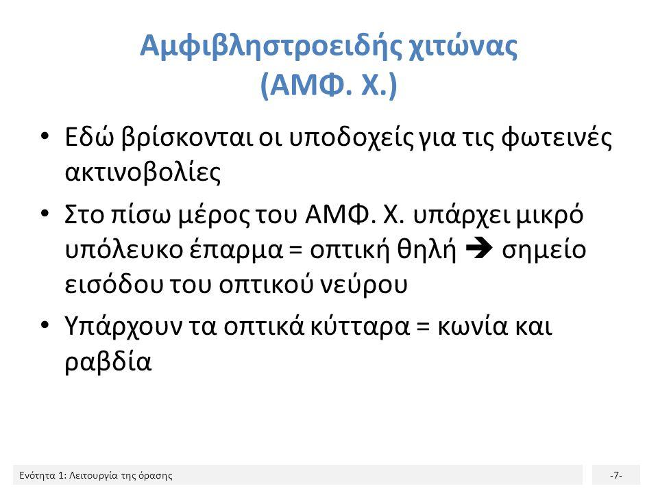 Αμφιβληστροειδής χιτώνας (ΑΜΦ. Χ.)