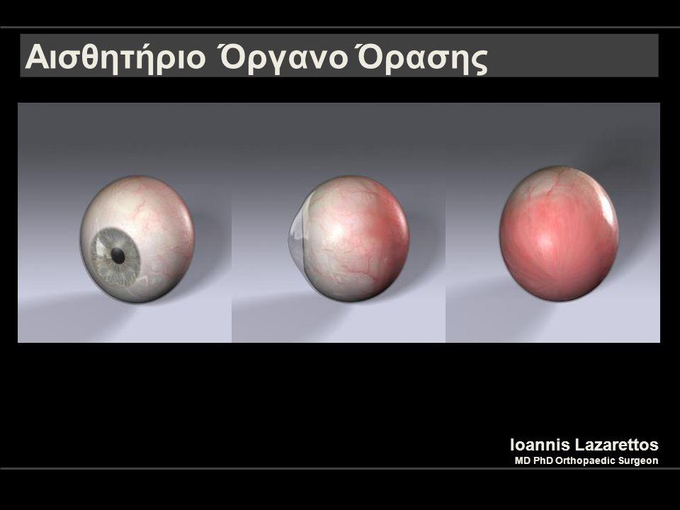 Αισθητήριο Όργανο Όρασης