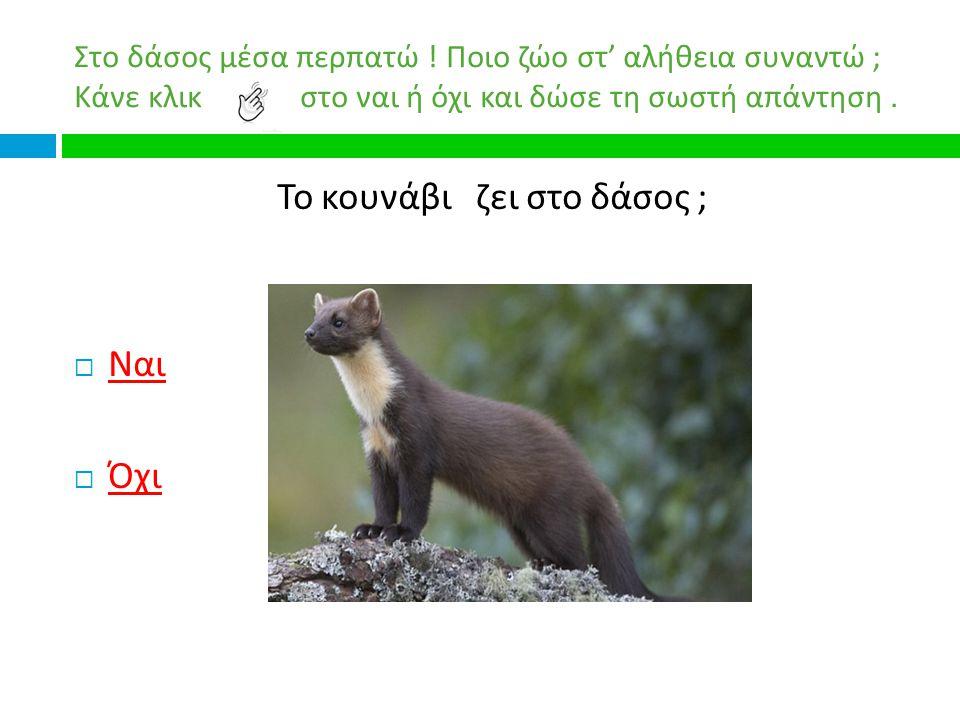 Το κουνάβι ζει στο δάσος ;