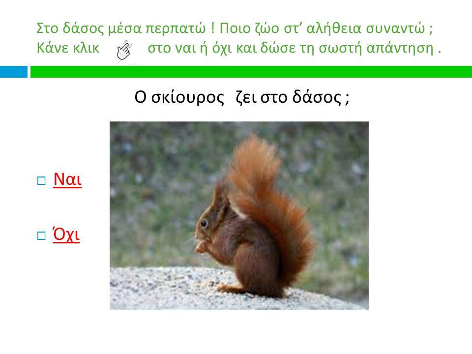 Ο σκίουρος ζει στο δάσος ;