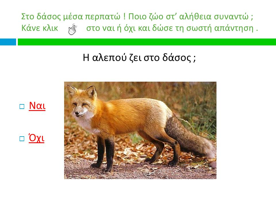 Η αλεπού ζει στο δάσος ; Ναι Όχι