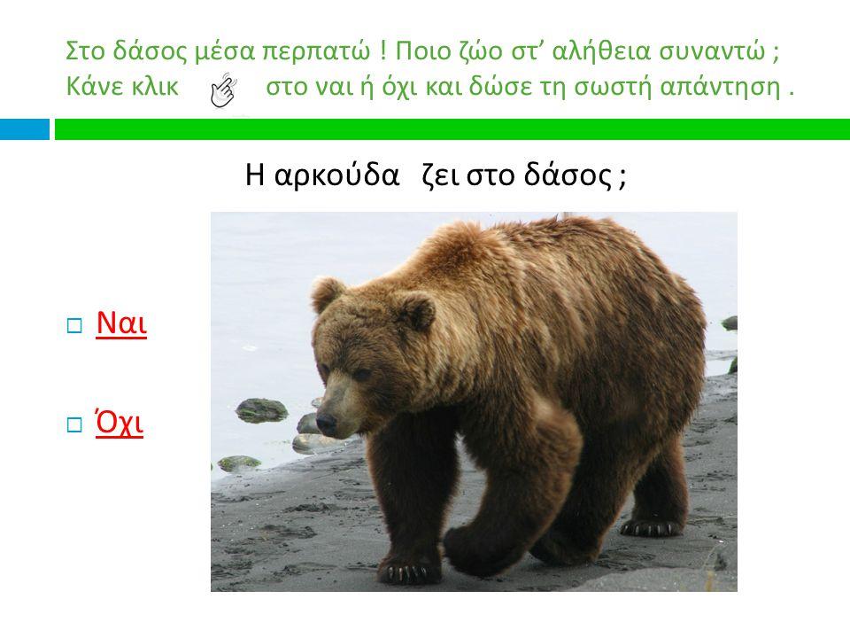 Η αρκούδα ζει στο δάσος ;