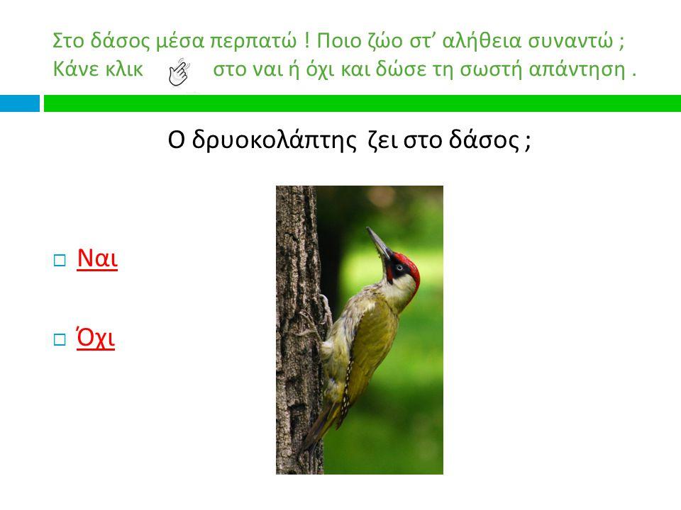 Ο δρυοκολάπτης ζει στο δάσος ;