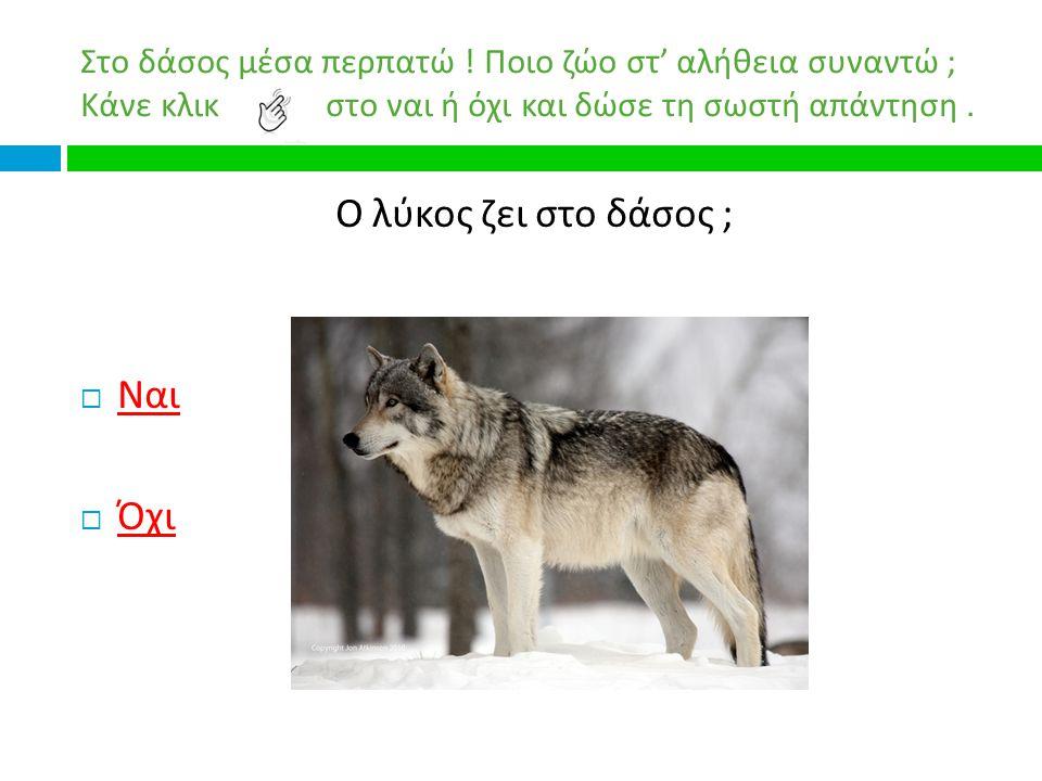 Ο λύκος ζει στο δάσος ; Ναι Όχι