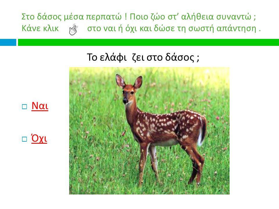 Το ελάφι ζει στο δάσος ; Ναι Όχι