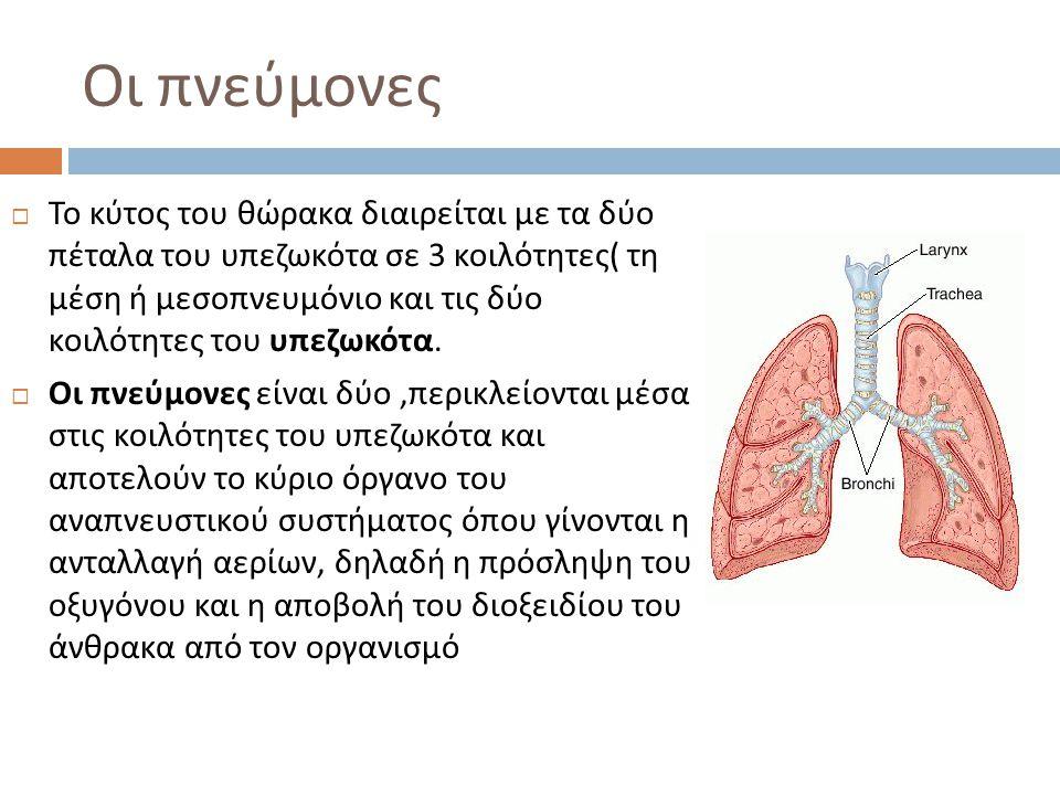 Οι πνεύμονες