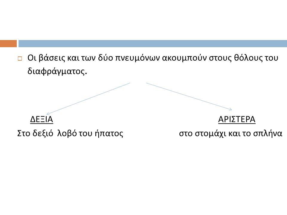 Οι βάσεις και των δύο πνευμόνων ακουμπούν στους θόλους του διαφράγματος.