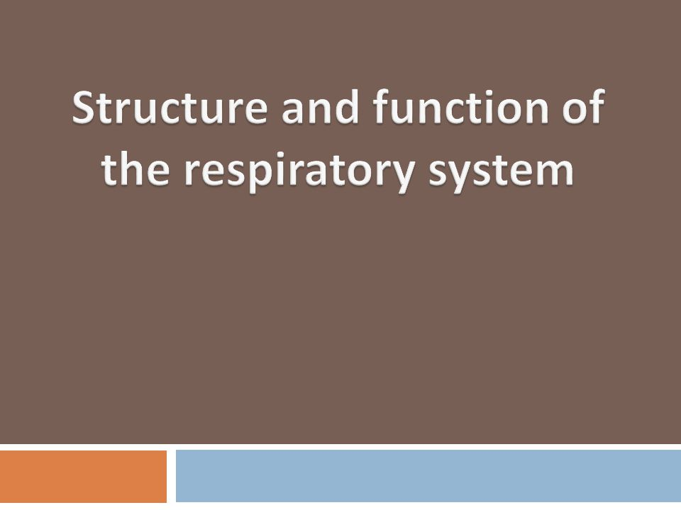 Structure and function of the respiratory system