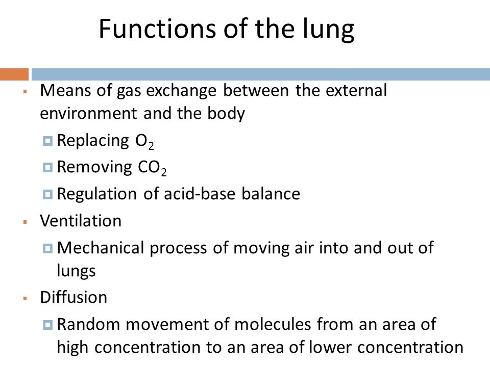Functions of the lung Means of gas exchange between the external environment and the body. Replacing O2.