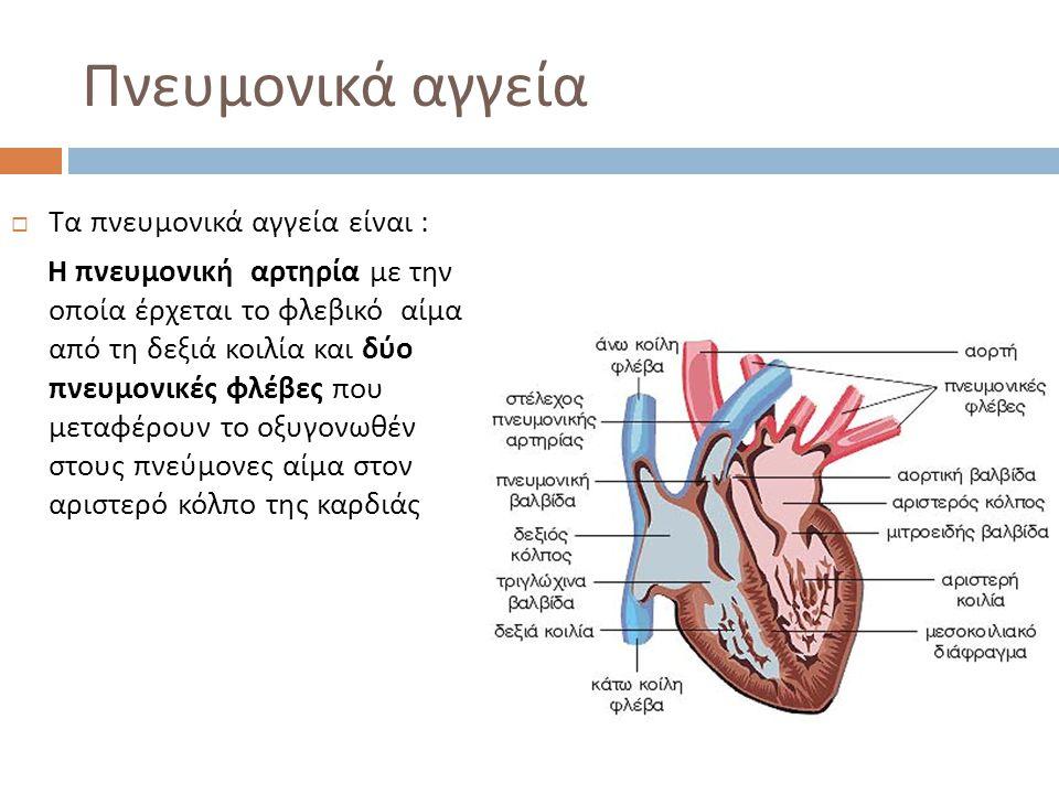 Πνευμονικά αγγεία Τα πνευμονικά αγγεία είναι :