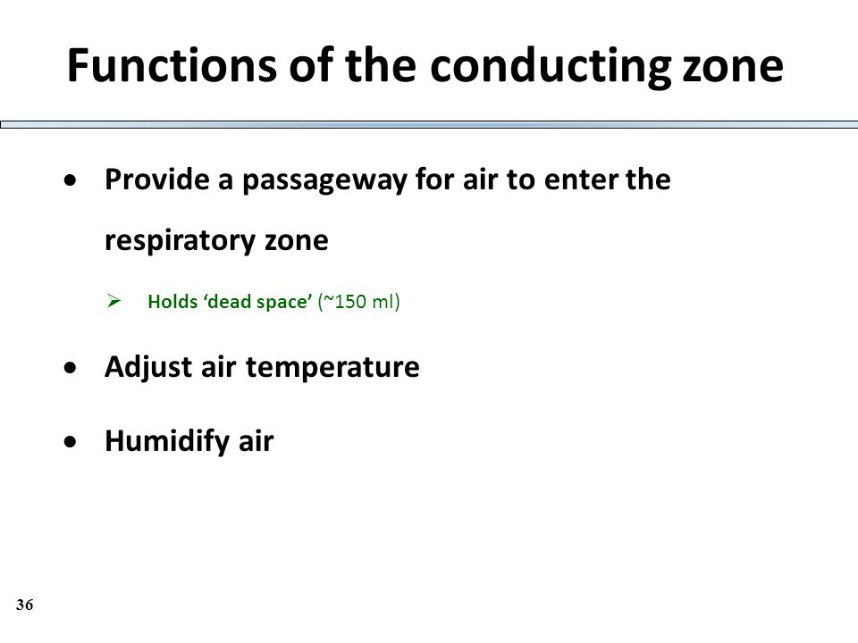 Functions of the conducting zone