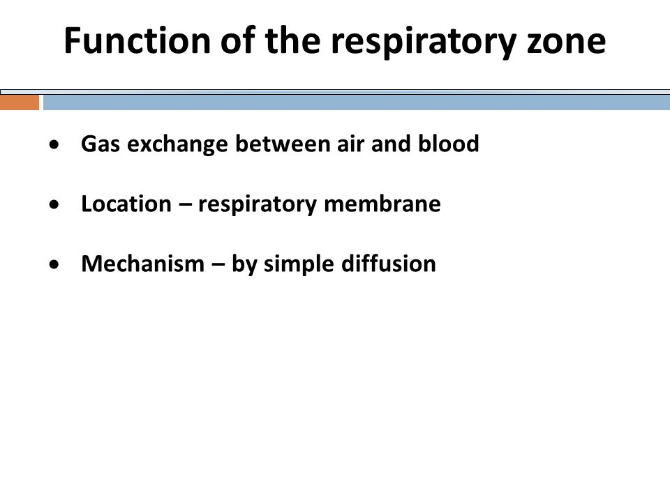 Function of the respiratory zone