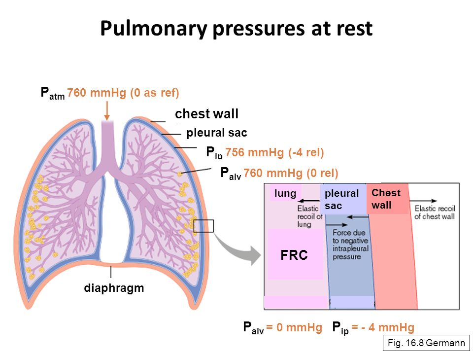 Pulmonary pressures at rest