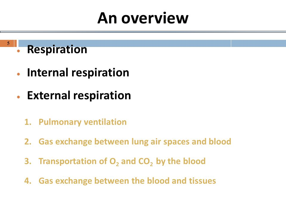An overview Respiration Internal respiration External respiration