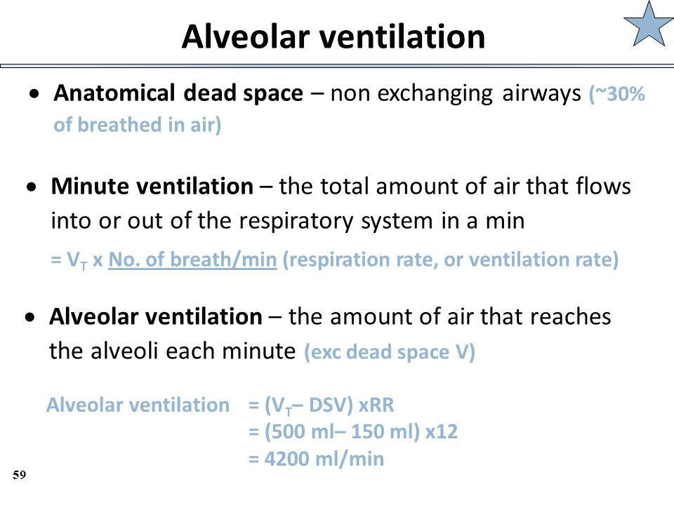 Alveolar ventilation Anatomical dead space – non exchanging airways (~30% of breathed in air)