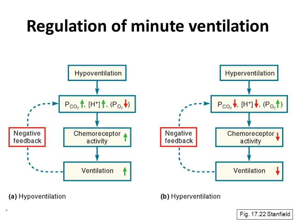 Regulation of minute ventilation