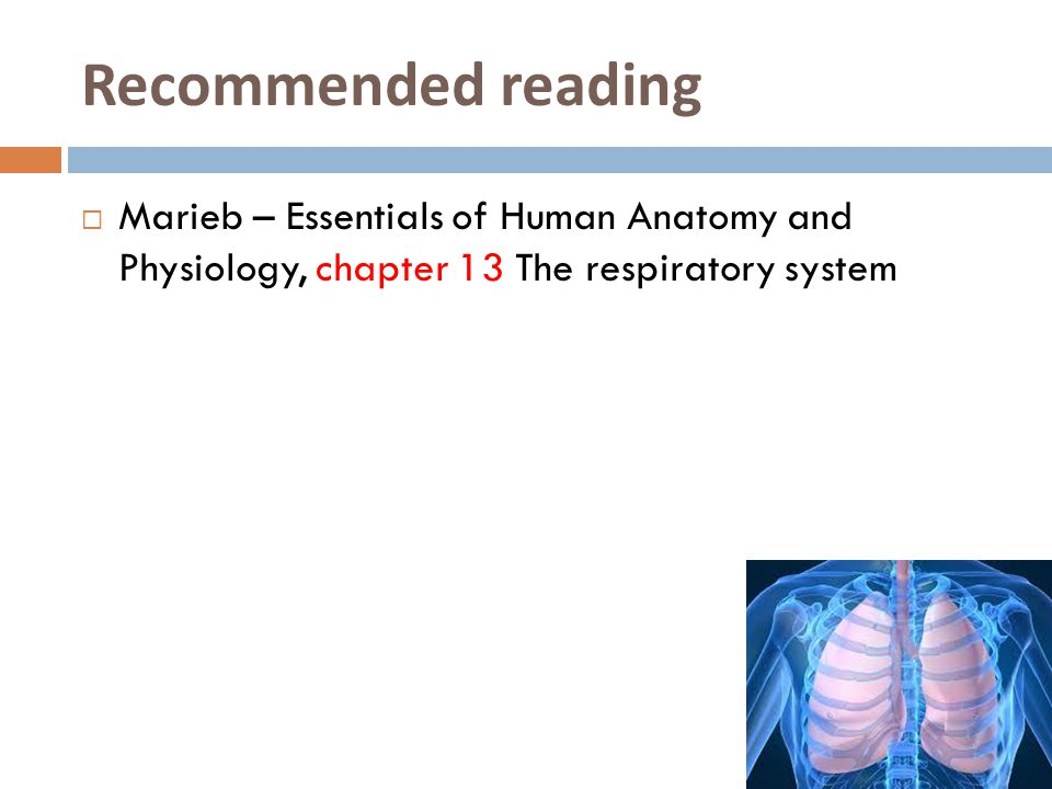 Recommended reading Marieb – Essentials of Human Anatomy and Physiology, chapter 13 The respiratory system.