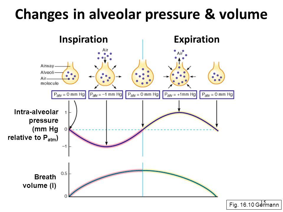 Changes in alveolar pressure & volume