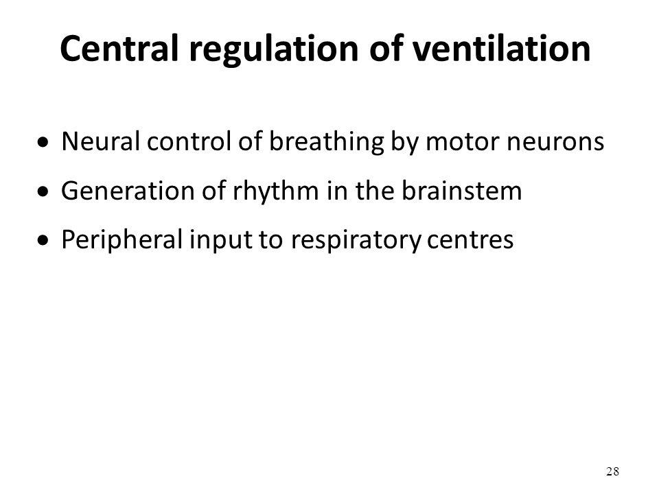 Central regulation of ventilation