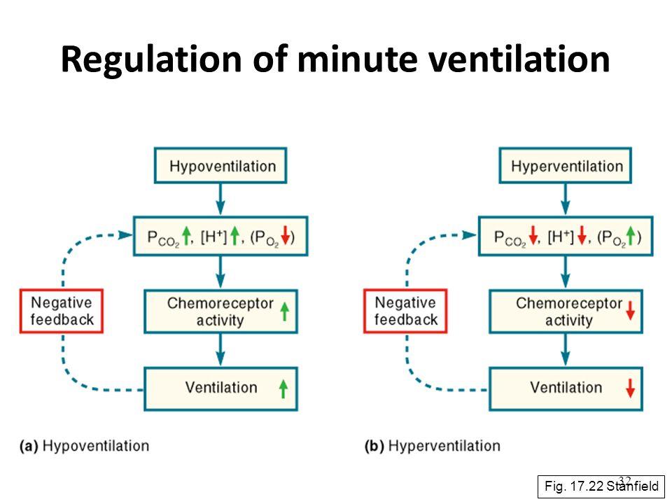 Regulation of minute ventilation