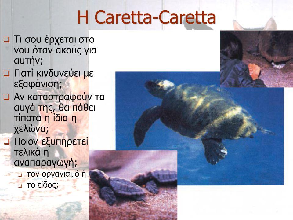 Η Caretta-Caretta Τι σου έρχεται στο νου όταν ακούς για αυτήν;