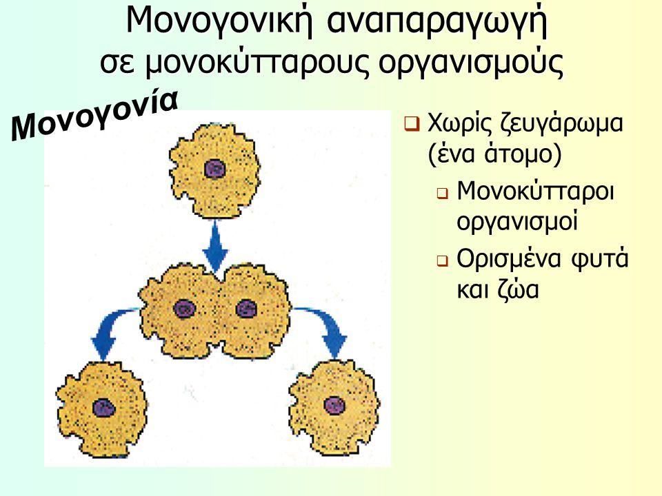 Μονογονική αναπαραγωγή σε μονοκύτταρους οργανισμούς