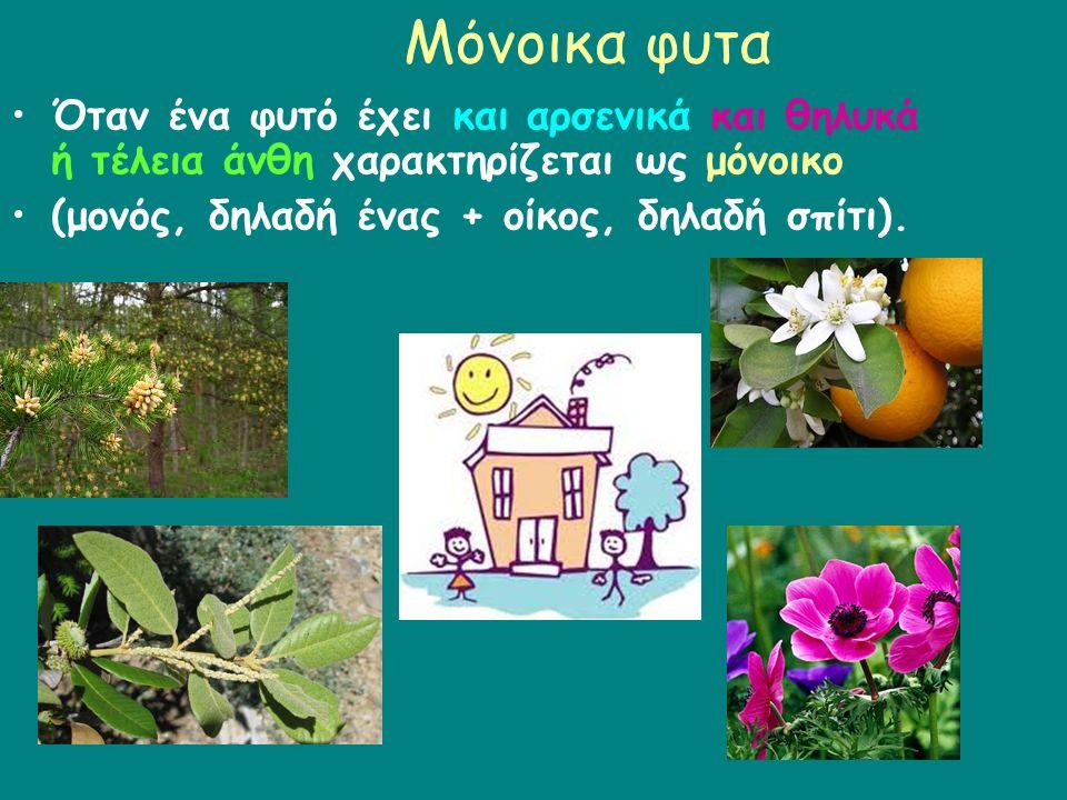Μόνοικα φυτα Όταν ένα φυτό έχει και αρσενικά και θηλυκά ή τέλεια άνθη χαρακτηρίζεται ως μόνοικο.