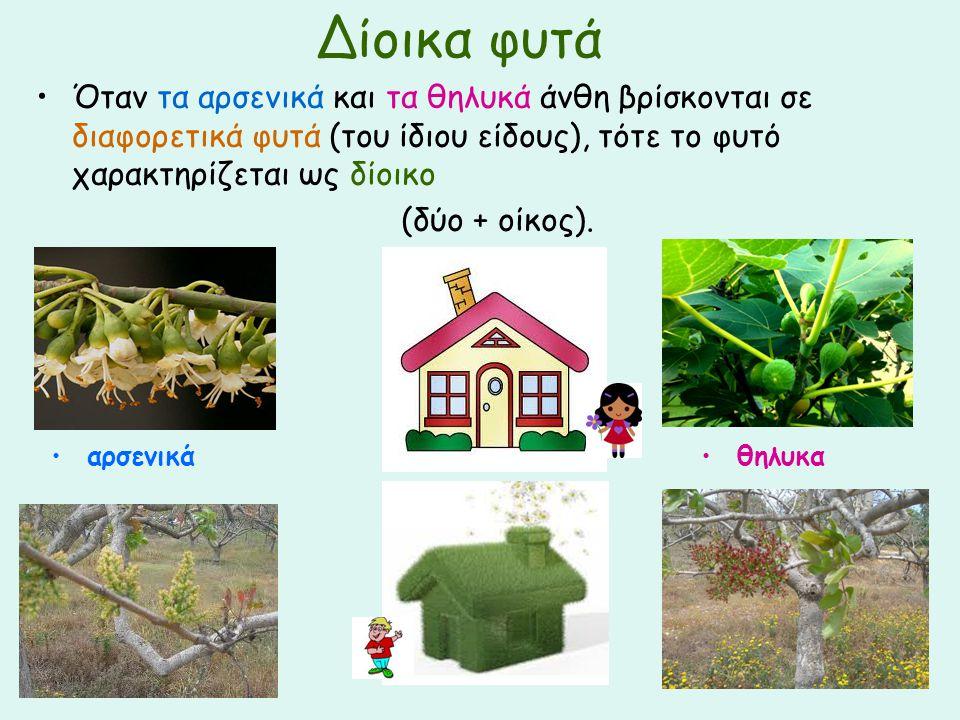Δίοικα φυτά Όταν τα αρσενικά και τα θηλυκά άνθη βρίσκονται σε διαφορετικά φυτά (του ίδιου είδους), τότε το φυτό χαρακτηρίζεται ως δίοικο.