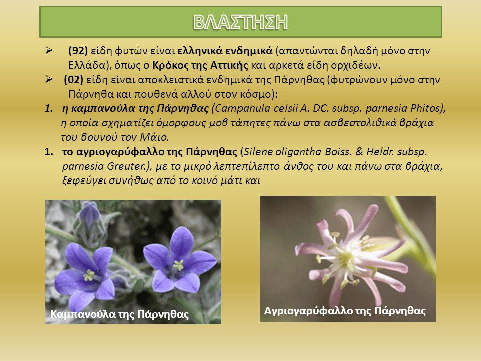ΒΛΑΣΤΗΣΗ (92) είδη φυτών είναι ελληνικά ενδημικά (απαντώνται δηλαδή μόνο στην Ελλάδα), όπως ο Κρόκος της Αττικής και αρκετά είδη ορχιδέων.