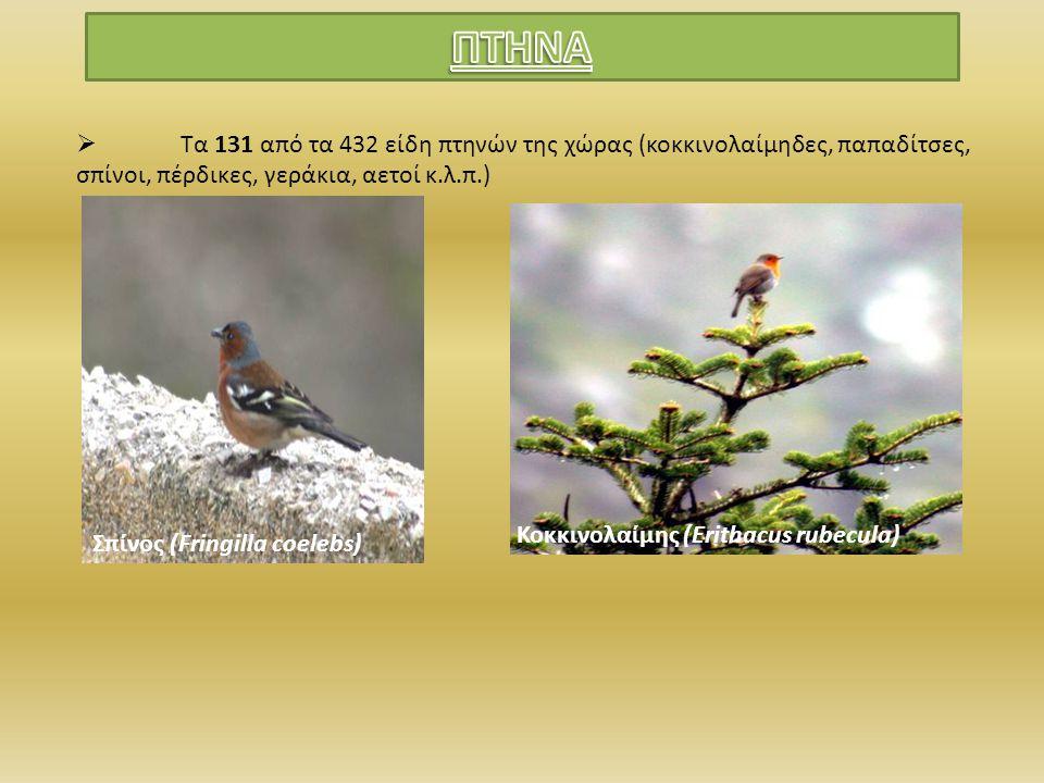 ΠΤΗΝΑ Τα 131 από τα 432 είδη πτηνών της χώρας (κοκκινολαίμηδες, παπαδίτσες, σπίνοι, πέρδικες, γεράκια, αετοί κ.λ.π.)