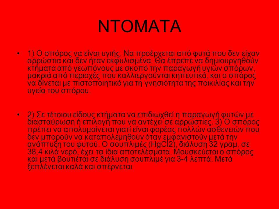 NTOMATA