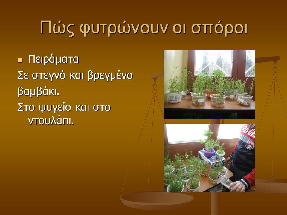 Πώς φυτρώνουν οι σπόροι