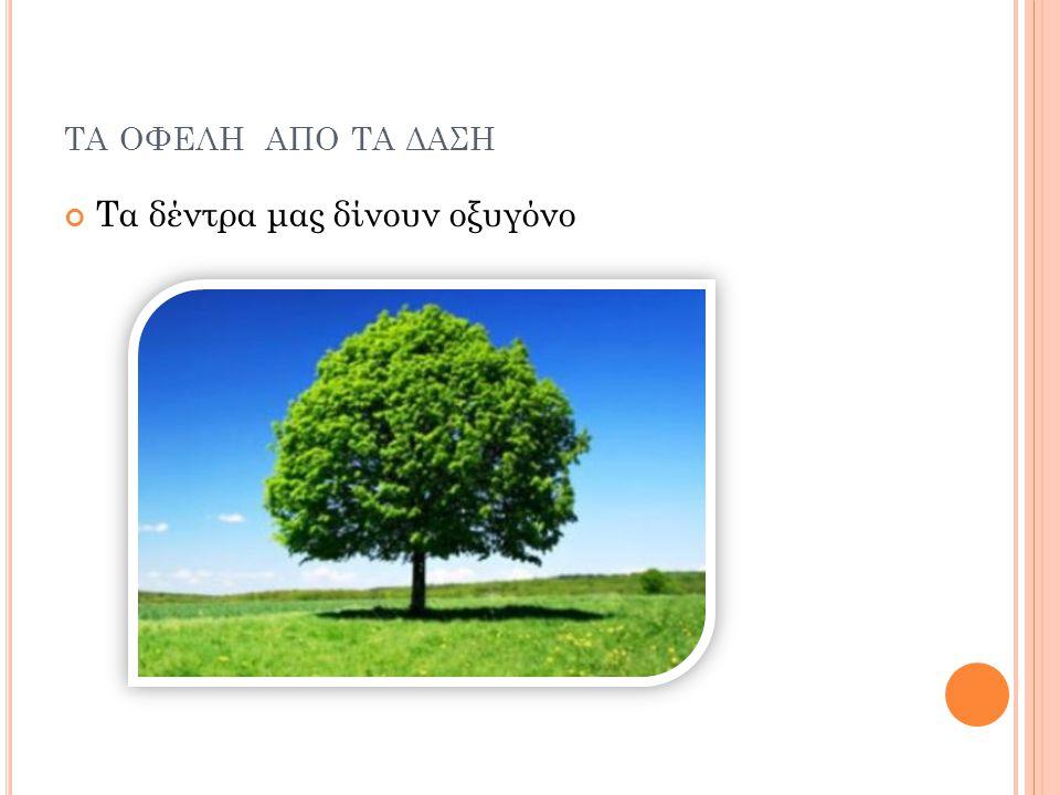 τα οφελη απο τα δαση Τα δέντρα μας δίνουν οξυγόνο