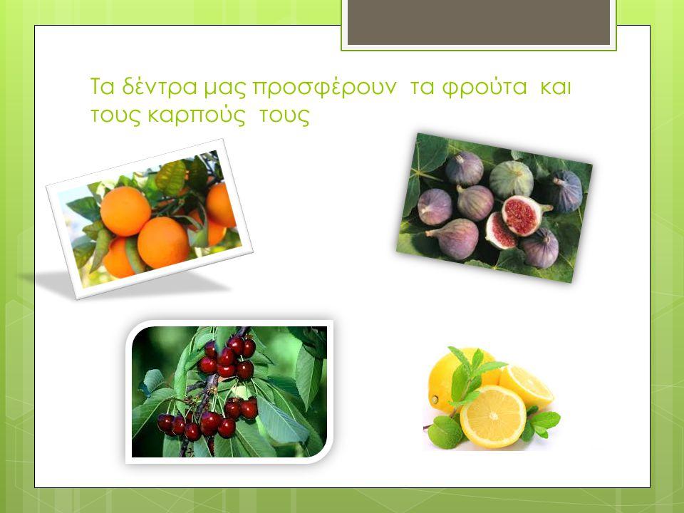 Τα δέντρα μας προσφέρουν τα φρούτα και τους καρπούς τους