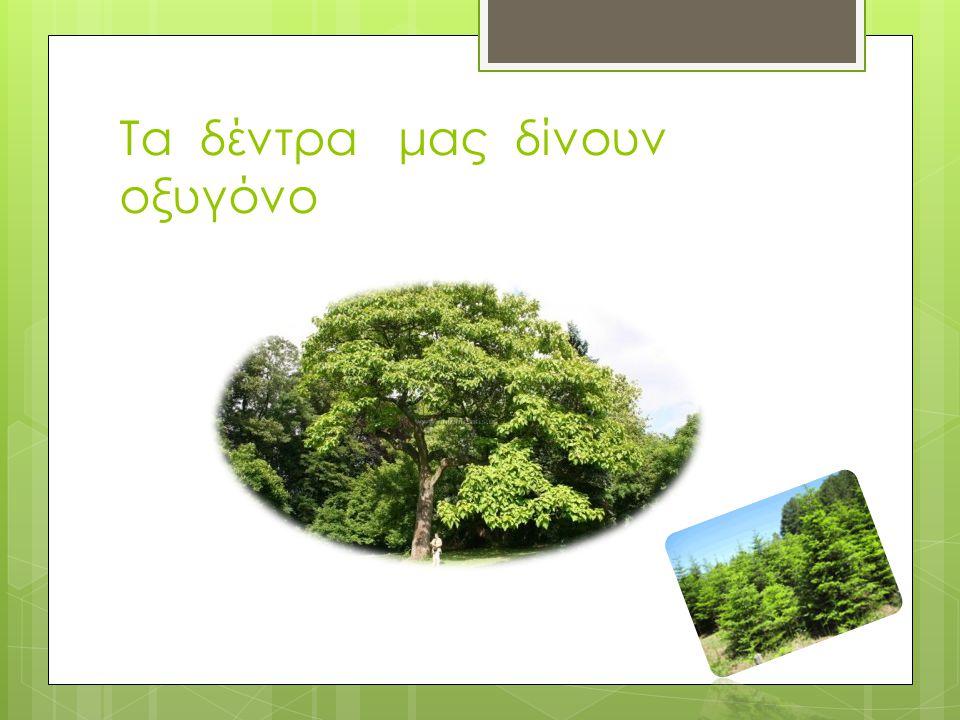 Τα δέντρα μας δίνουν οξυγόνο