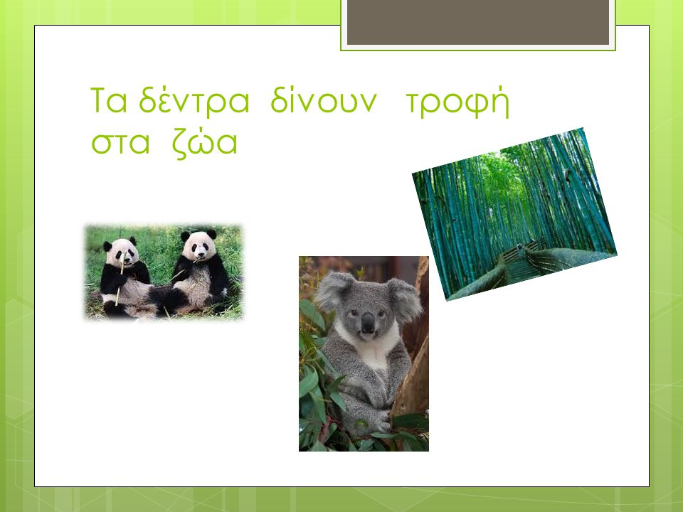 Τα δέντρα δίνουν τροφή στα ζώα