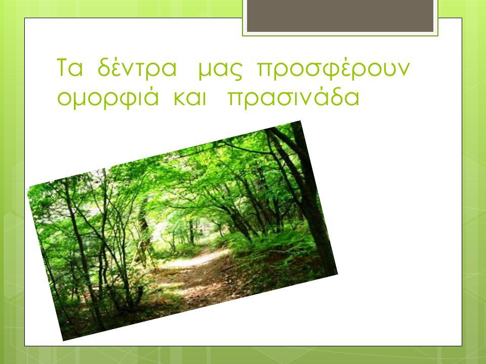 Τα δέντρα μας προσφέρουν ομορφιά και πρασινάδα