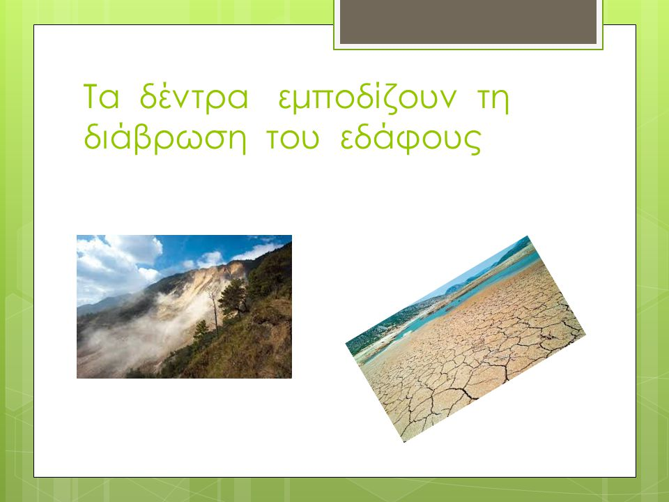 Τα δέντρα εμποδίζουν τη διάβρωση του εδάφους